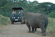 Rhino Sighting on Game Drive,Pilanesberg Game Reserve for an Safari in a Big Five Game Reserve